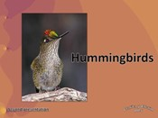 Hummingbirds<BR/> English
