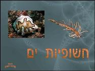 חשופיות ים<BR/>Nudibranch