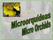 Micro Orchids<BR/>מיני סחלבים